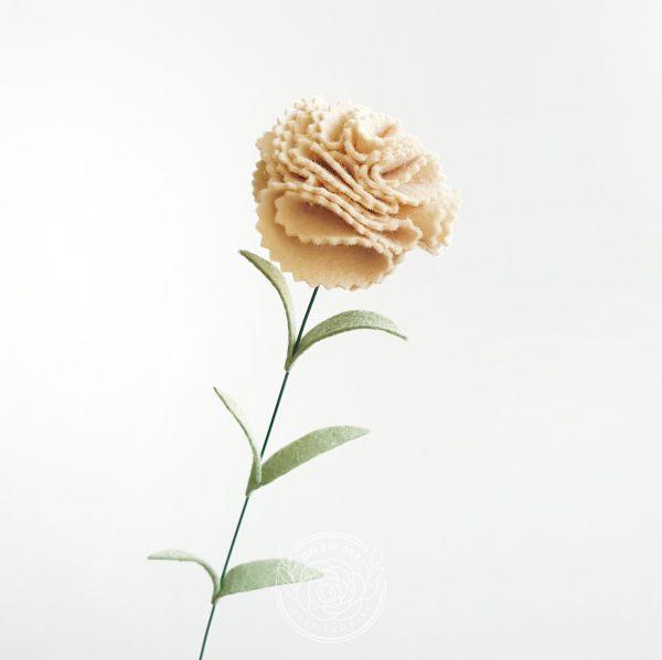 Carnation champagne