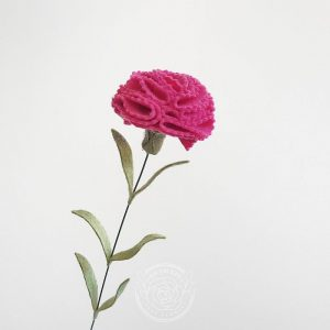 Carnation fuchsia